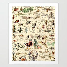 Vintage Insect Identification Chart // Arthropodes by Adolphe Millot XL 19th Century Science Artwork Art Print