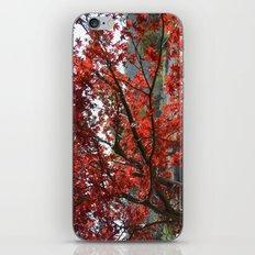 Japanese Maple iPhone & iPod Skin