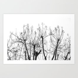 Branched Out 2 Art Print