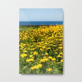 Field of yellow daisies Metal Print