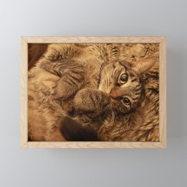 Cat Framed Mini Art Print