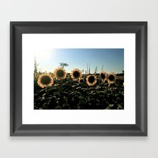 Sunflower Framed Art Print
