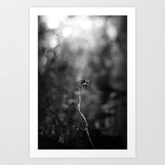 Scorched Art Print