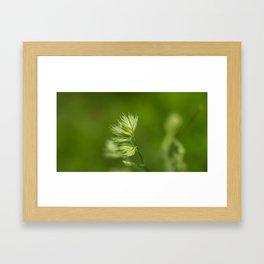 Green Plant Framed Art Print