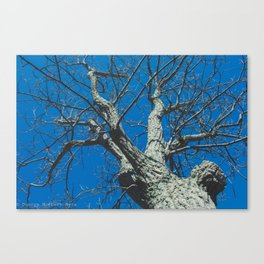 Treeloutte #2 Canvas Print