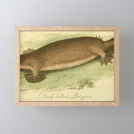 Vintage Print - Bullock's London Museum & Pantherion (1812) - Duck-Billed Platypus Framed Mini Art Print