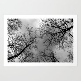 Grey sky, naked trees Art Print