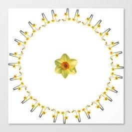 Daffodil Madness Canvas Print