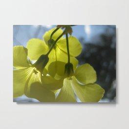 Floral Radiance II Metal Print