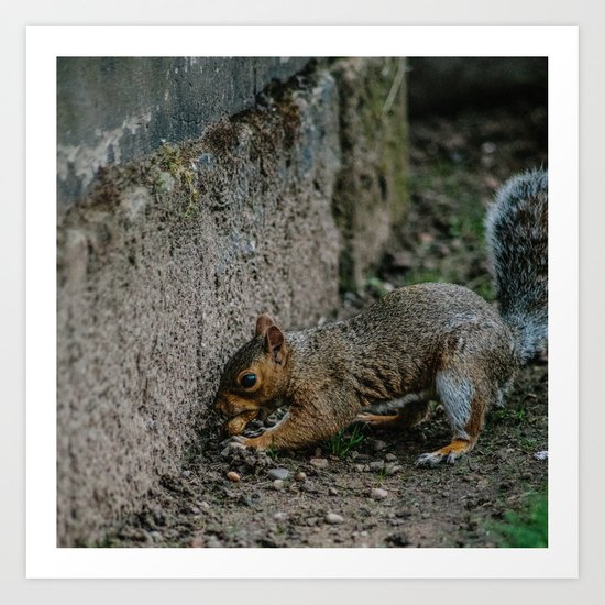 City Squirrel Art Print