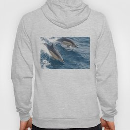 Common Dolphin Hoody
