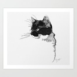 Black and White Cat in Pen and Ink Art Print