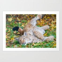 Playful Lynx Art Print