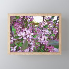 Profusion Crabapple 3 Framed Mini Art Print