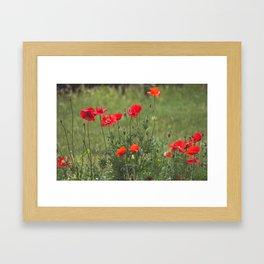 Poppy. Framed Art Print