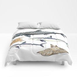 Shark diversity Comforters