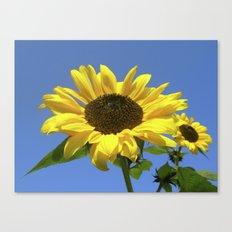 summer sunflower V Canvas Print