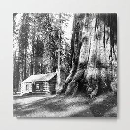 A log cabin dwarfed by a Big Tree in Mariposa Grove in Yosemite National Park, ca.1920 Metal Print