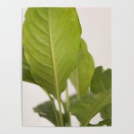 Hojas verdes (2) (green leafs) Poster