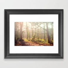 Woodland Fog Framed Art Print