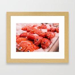 Snapper Framed Art Print