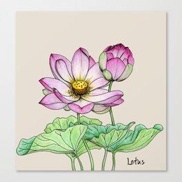 Botanical illustration lotus Canvas Print