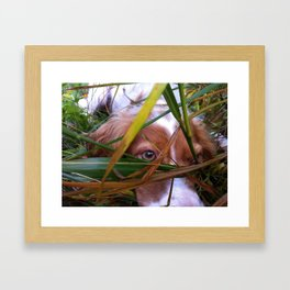 Dog Hides While Hunting Framed Art Print