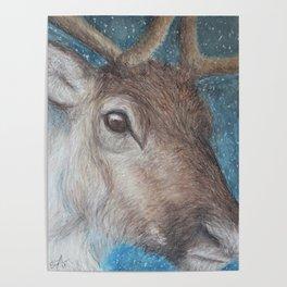 Reindeer (Rangifer tarandus) Poster