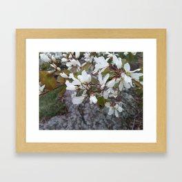 Juneberry Framed Art Print