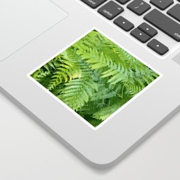 Lush green fern leaves, tropical forest illustration in vivid colors Sticker