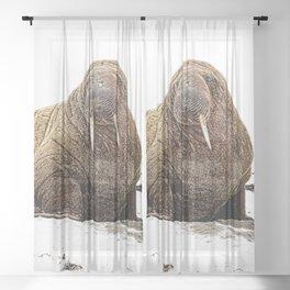 Walrus - No background Sheer Curtain