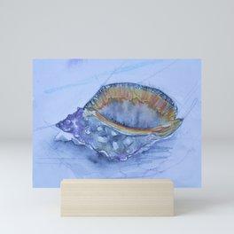 Helmet Shell -Galeodea echinophora- Mini Art Print