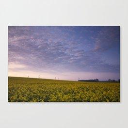 Yellow Oilseed Rape field and wind turbines at sunrise, North Pickenham, Norfolk, UK Canvas Print