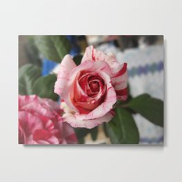 Rose Bud in Stripes Metal Print