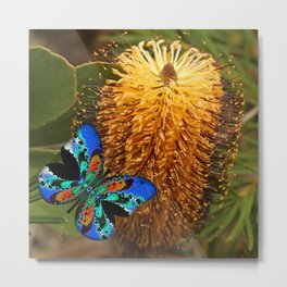Butterfly on Banksia Metal Print