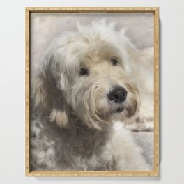 Dog Goldendoodle Golden Doodle Serving Tray