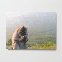 Monkey Eating Boiled Egg Metal Print