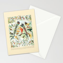 Exotic Birds // Oiseaux IV by Adolphe Millot 19th Century Science Textbook Diagram Artwork Stationery Cards