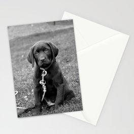 B&W Puppy Stationery Cards