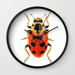 Orange Beetle Wall Clock