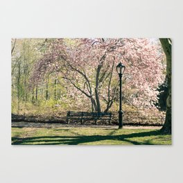 Magnolia's Bloom in Central Park Canvas Print