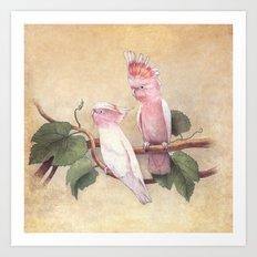 Pink Cockatoos  Art Print
