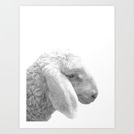 Black and White Sheep Art Print