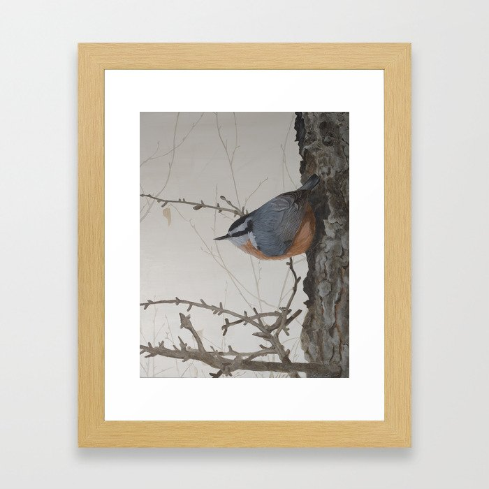 Red-breasted Nuthatch at Yellowknife River Framed Art Print by ShawnaLampiLegaree - Conservation Natural - X-Small-10x12 photo
