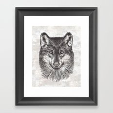 Canis Lupus (Gray Wolf) Framed Art Print