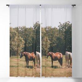 Horses Blackout Curtain
