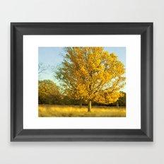 Yellow II Framed Art Print