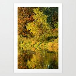 At Maynes Pond Art Print