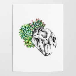 Rock Rose Cat Skull Poster