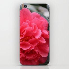 Pink Camellias iPhone Skin